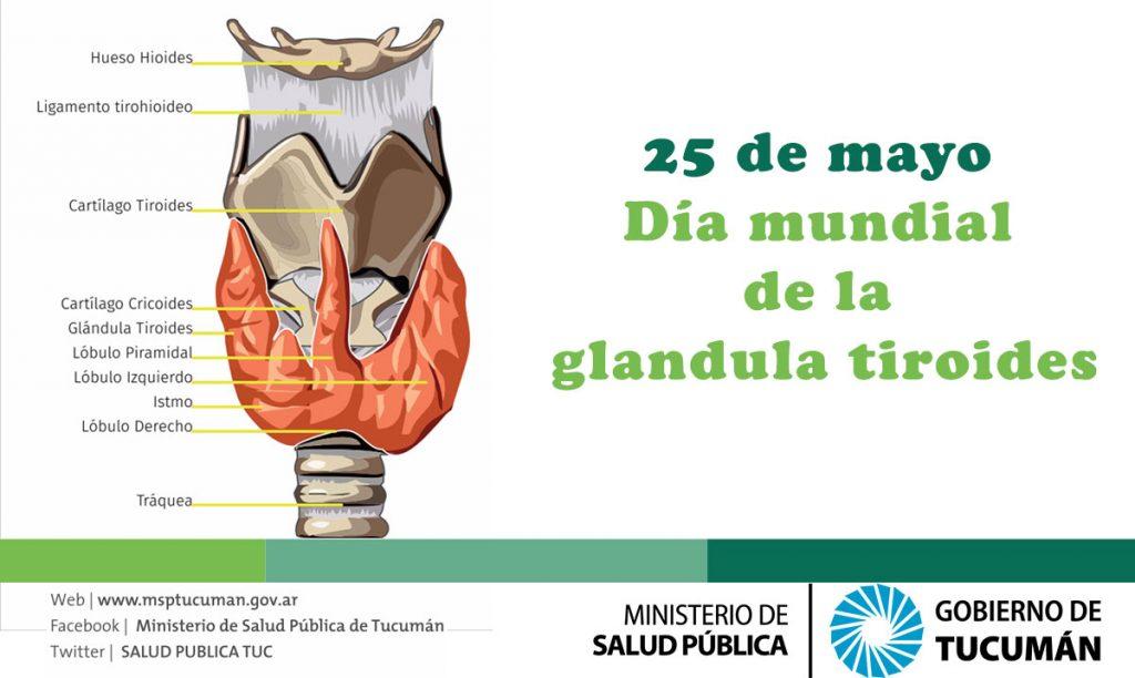 Glándula tiroides: la detección a tiempo es fundamental – Ministerio ...